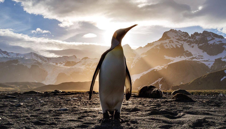 ¿Qué es Google Penguin y cómo salir de una penalización?