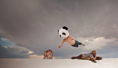 ¿Qué es Google Panda y cómo salir de una penalización por malos contenidos?