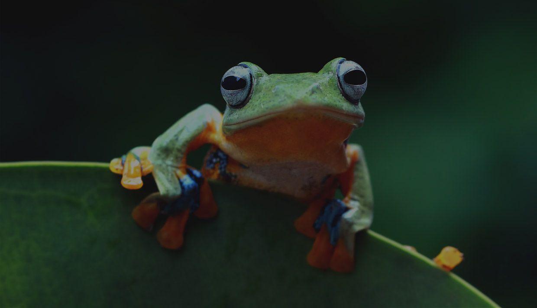 Guía de Screaming Frog. Te enseñamos cómo mejorar tu web con esta herramienta